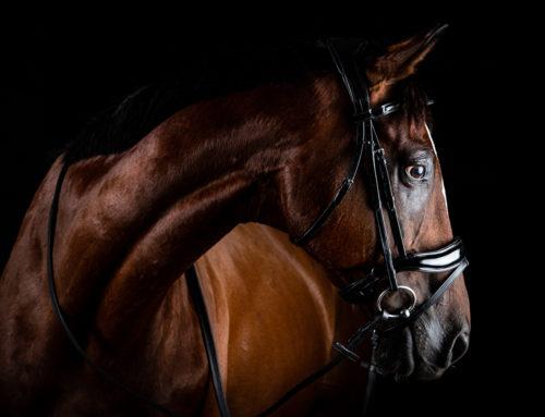 Prestigio Equestrian – équipement équestre